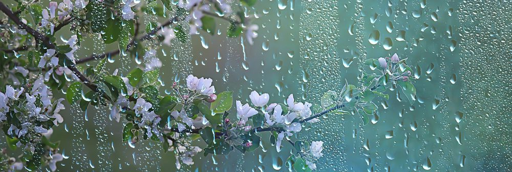Rain droplets falling from beautiful spring flowers