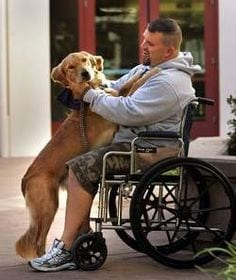 dog caring How A DOG Can Change Your Life?