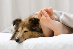 Dog sleeping on the bed by owners feet How A DOG Can Change Your Life?