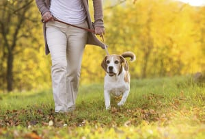Dog walk How A DOG Can Change Your Life?