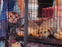 Dogs lying down in a cage