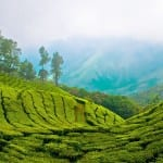 Munnar : A Gorgeous  Holiday Gift for Every Nature lover.. 16