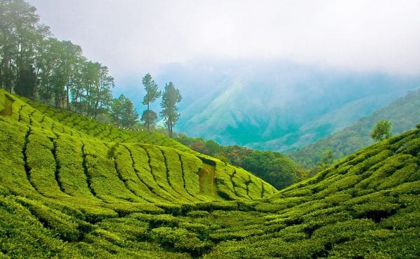 Munnar : A Gorgeous  Holiday Gift for Every Nature lover.. munnar