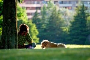 dog-264718_640