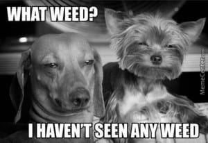 what-weed_o_4295267