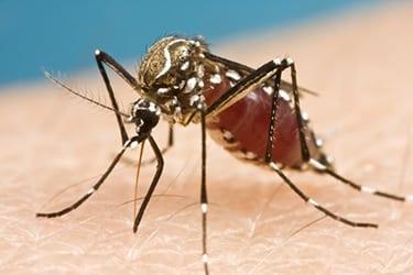 zika virus zika virus