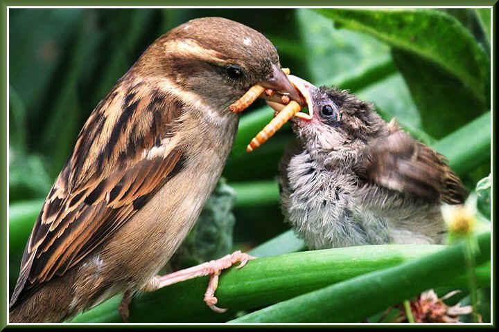 Analysing the Kissing Paradox – Why Do Humans Kiss? 3