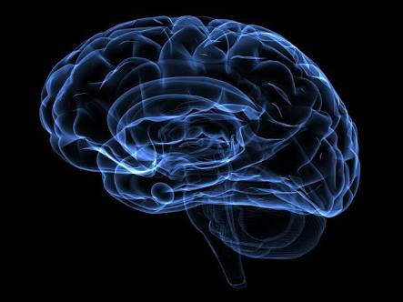 Which Part of Brain Are You? Which part of brain are you?