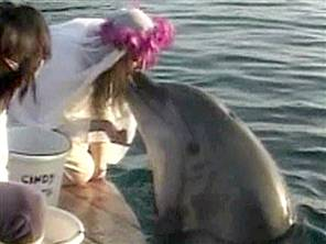Dolphins and Humans: The Real stories 2