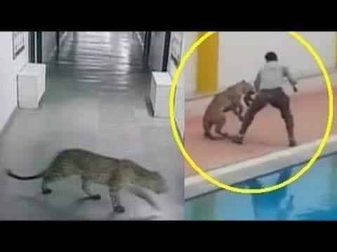 Leopard Raises Ruckus in Bengaluru School, We Are All to Blame! 2