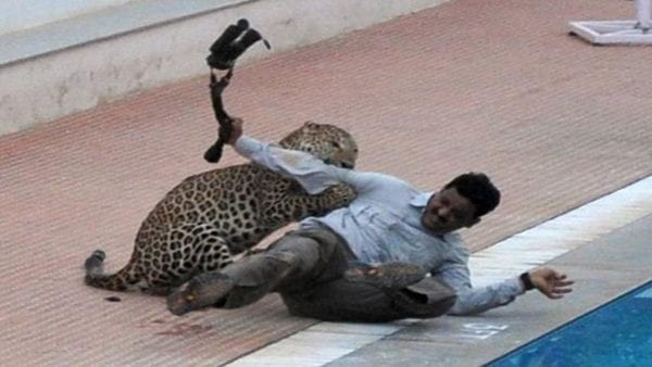 Leopard Raises Ruckus in Bengaluru School, We Are All to Blame! 5