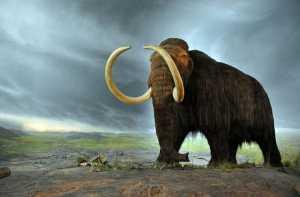 1.extinct-animal-resurrected-130404-660x433-mammoth-660x433