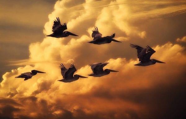 Origin of the term 'Flying Saucer' 1