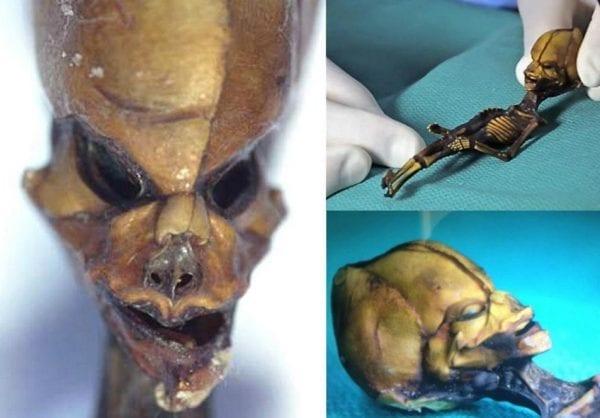 6 inch Long Skeleton - Human or...? 21