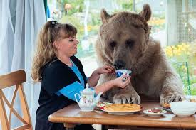 Now, Have Your Pet Bear Sit With You bear