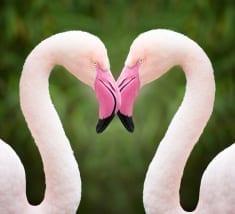 stock-photo-76879483-flamingo-heart-love