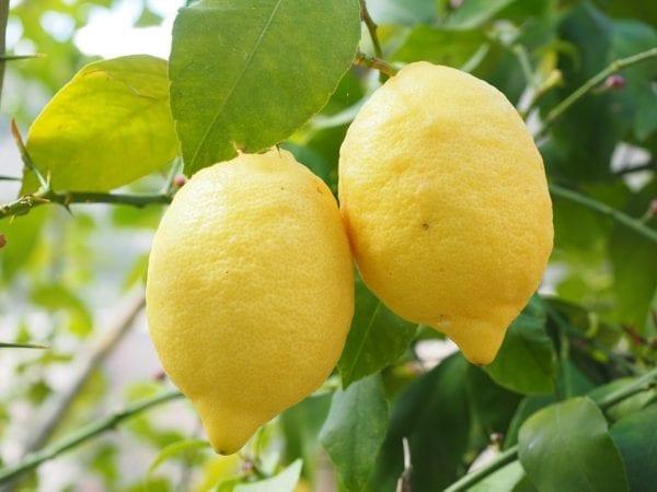 Usefulness of Lemon 12