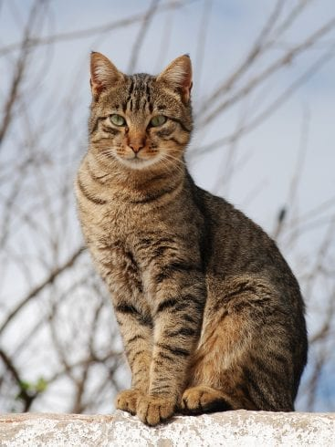 Image result for rich cat