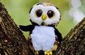 owl-845131_960_720 insomniac