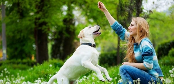 Tips on Keeping your Dog Healthy and Happy