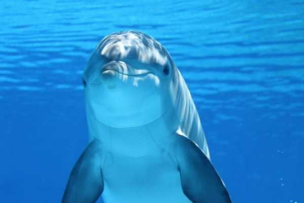 Dolphins and Humans: The Real stories 1