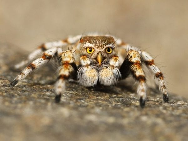 10 Most Weird Phobias You Will Ever See 1