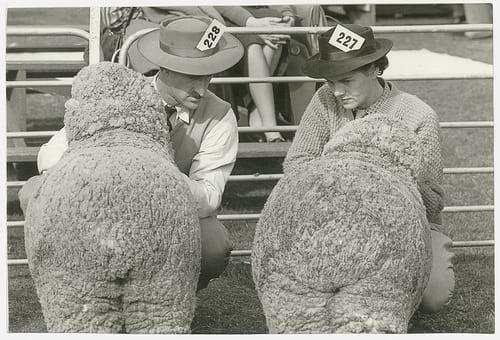 maryland sheep and wool - Festivals in the US in May