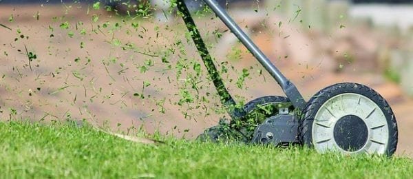 How To Prepare Your Lawn For Winter? 4