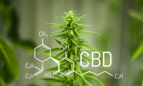 CBD Patches To Heal: A Review Of The Best Products In The Market Today