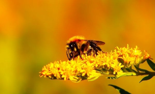 The Intriguing World Of Honey Bees honey bee