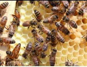 The Intriguing World Of Honey Bees 3