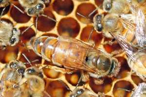 The Intriguing World Of Honey Bees 2