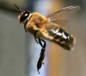 The Intriguing World Of Honey Bees 4
