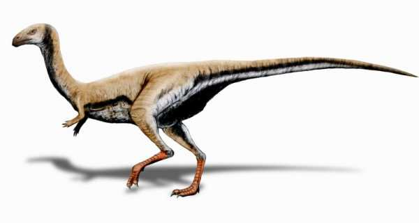 The Top Cute Baby Dinosaurs Ever 6