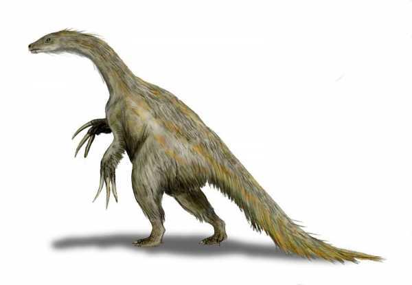 https://fossil.fandom.com/wiki/Nothronychus?file=Nothronychus_BW2.jpg