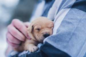 Animal Humane Society: Top 15 Rights We Need 3