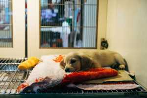 Animal Humane Society: Top 15 Rights We Need 10