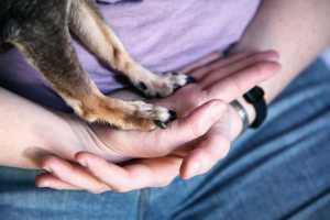 animal humane society