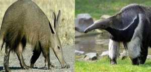 The Top 25 Things to Know about Anteaters 3