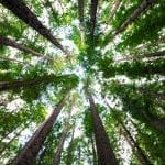 Did You Know There is a Phobia of Trees? Why it Happens 18