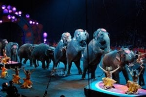 Top 20 Things That Used To Happen in a Circus 6