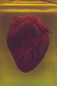The human heart, in all its glory.