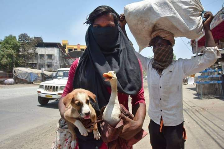 Migrant Workers Carry Their Pets For Hundreds of Kilometers 19