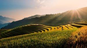 Rice Terrace Fields, Vietnam