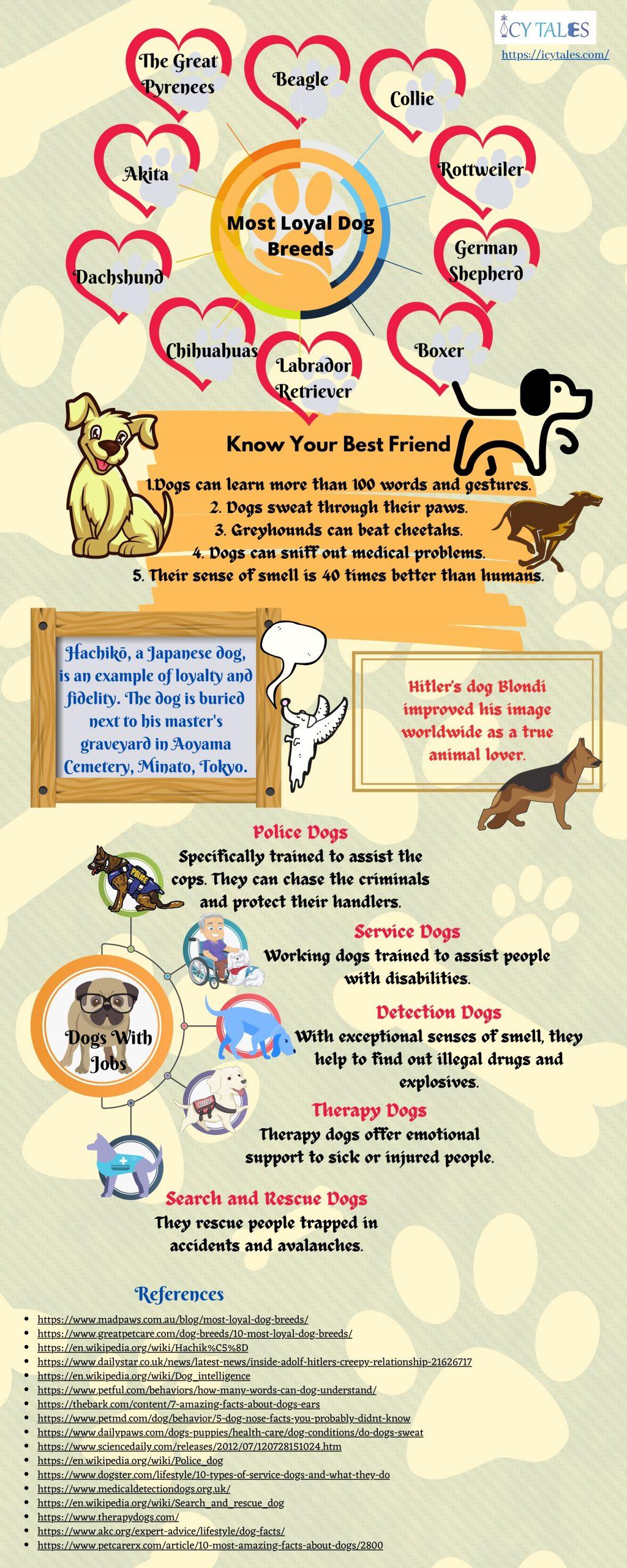 The Best Loyal Dog Breeds