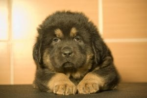 The 20 Most Expensive Pets You Can Own! 2