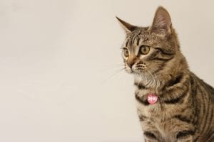 The 20 Most Expensive Pets You Can Own! 11