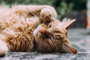 reasons to love cats