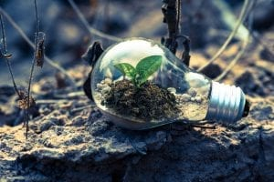 Environmental Mystery: 25 Interesting Facts About the Environment 2