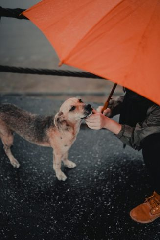 The Top 10 Amazing Reasons To Get A Dog 3